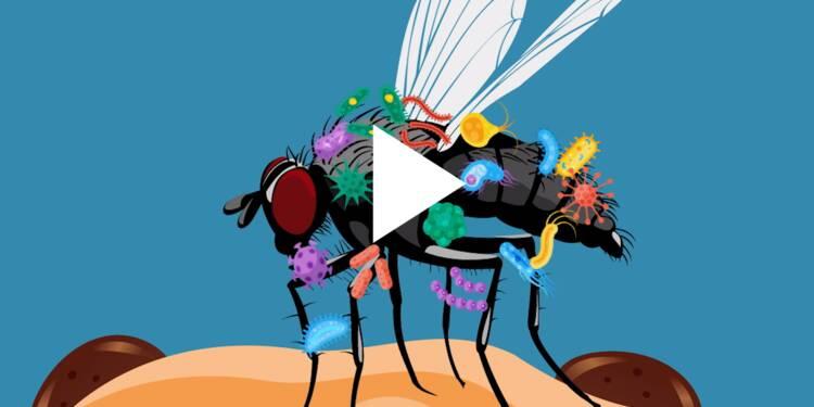 VIDEO: Voici ce qu'il se passe lorsqu'une mouche se pose sur votre nourriture — c'est pire que ce qu'on pensait