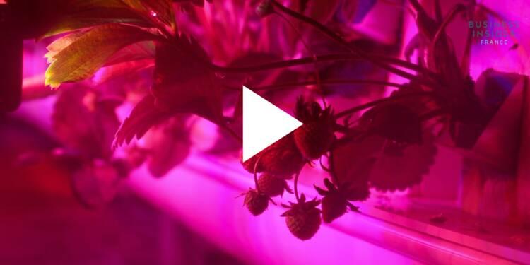 VIDEO: Cette startup française fait pousser des fraises en ville dans d'immenses containers hermétiques — voici à quoi ils ressemblent de l'intérieur