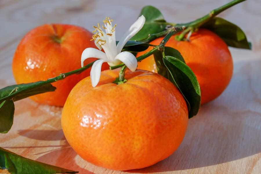 2. clémentines et mandarines