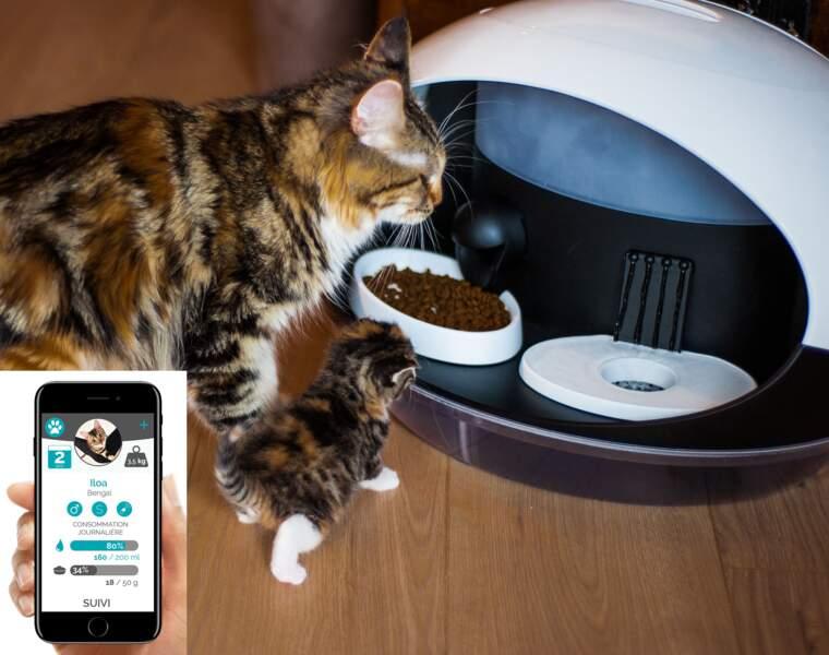 Catspad, le distributeur d'eau et de croquettes connecté