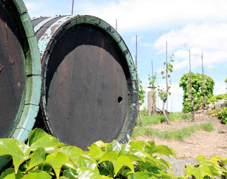 1890 : le vin trafiqué coule à flots en France