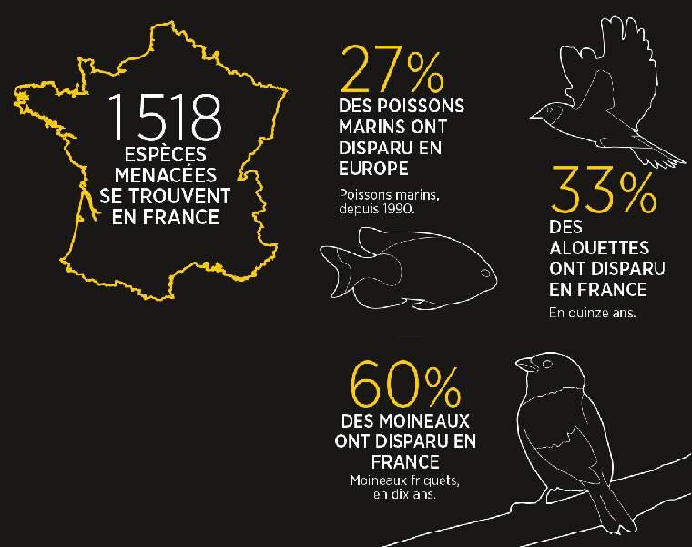 En France aussi, la faune est en danger
