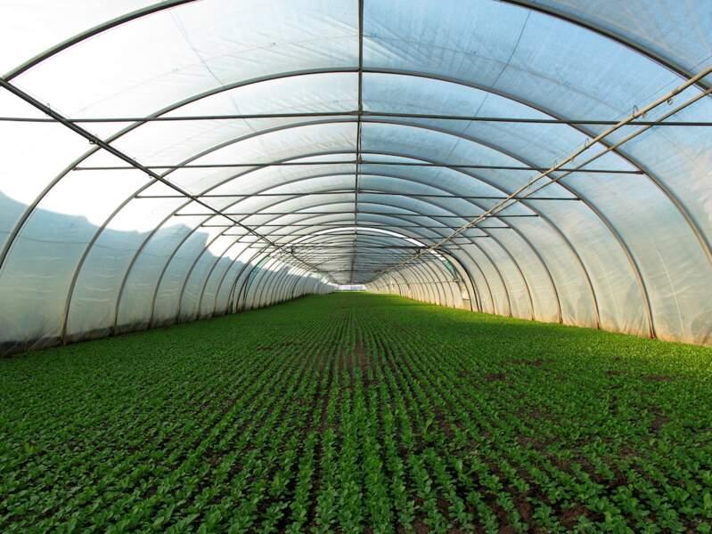 Dans le Loiret, la création de serres agricoles devrait générer 600 emplois