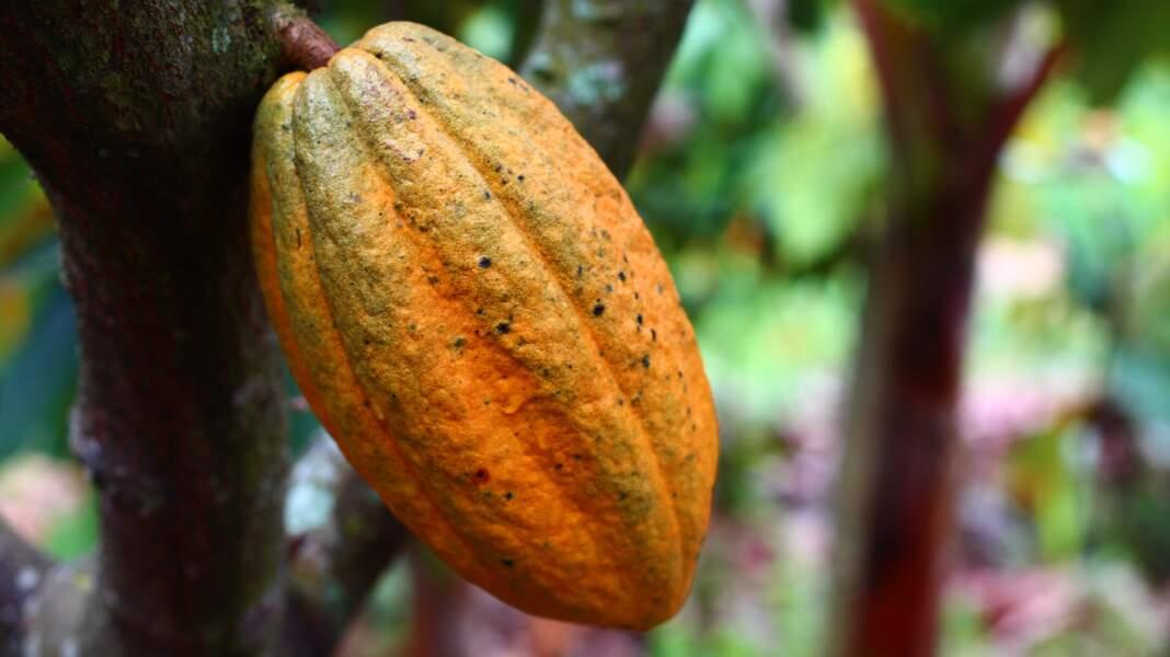 Valeurs de l'agro-alimentaire : l'inflation des matières premières pèse