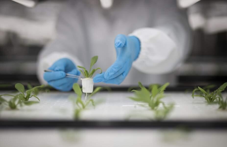 Hors sol: Toshiba fait des salades