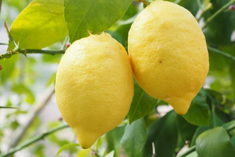 10. Citrons