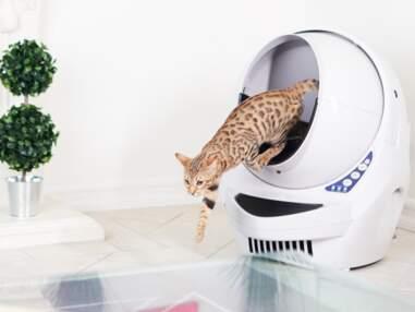 Litière connectée, souris artificielle... la folie des accessoires pour chats