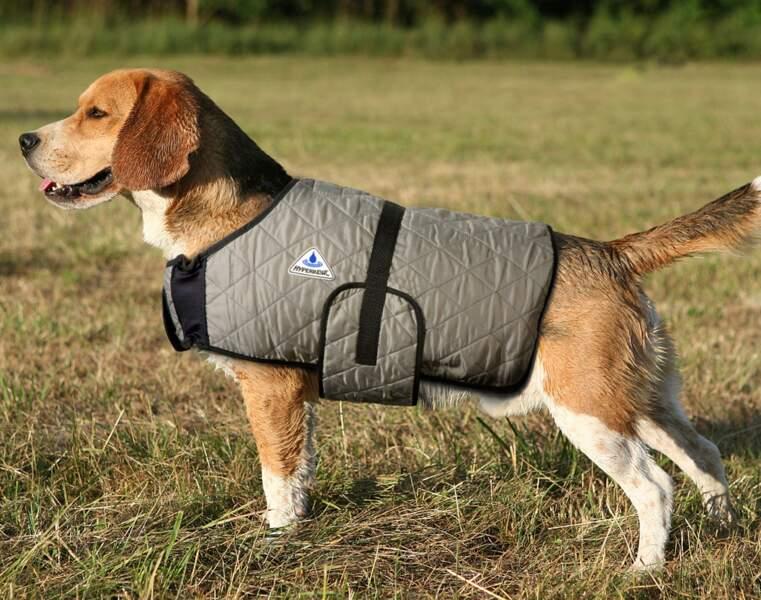 Des vêtements rafraîchissants pour les chiens