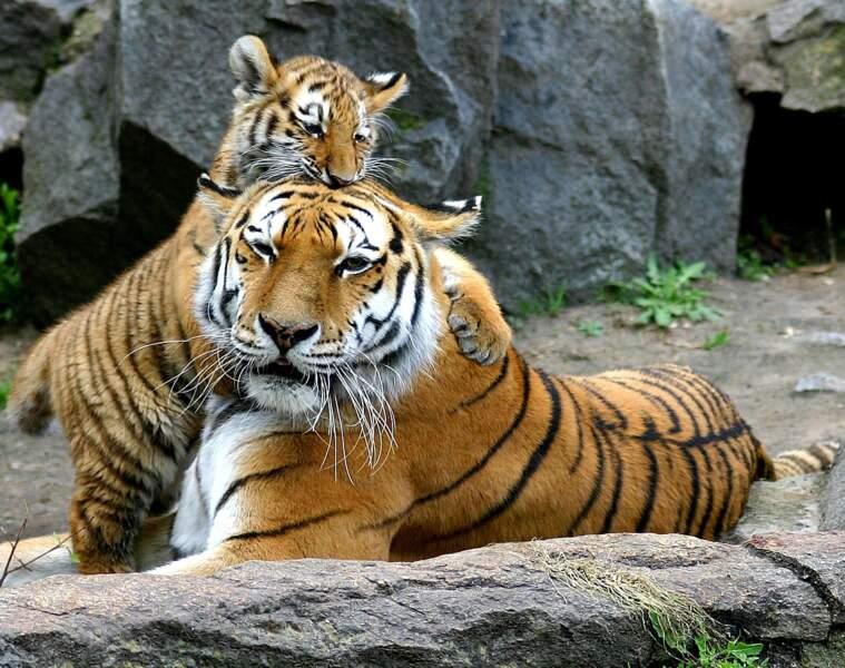 Espèces animales menacées, bétonisation des espaces naturels… la faune et la flore sont en danger