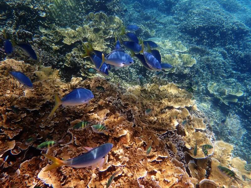 Le changement climatique fait disparaître la grande barrière de corail