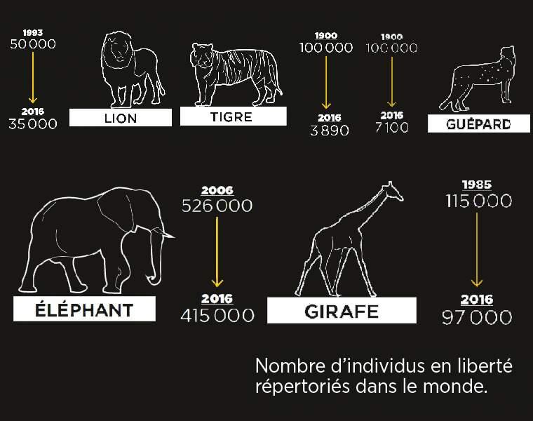 Les stars de nos zoos sont presque toutes menacées