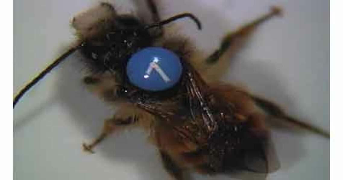 """Les """"super abeilles"""" d'Osmia améliorent le rendement des récoltes"""