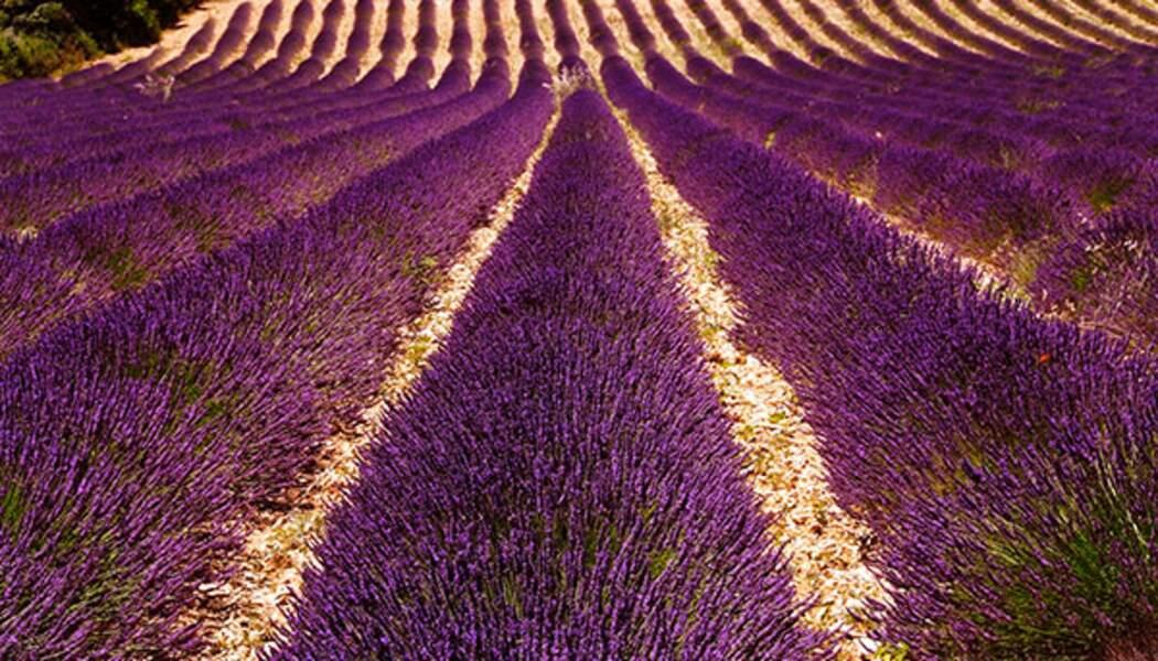 L'Occitane, la Provence aux quatre coins du monde