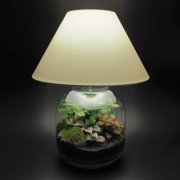 La lampe terrarium, par Jean-Paul Lacroix