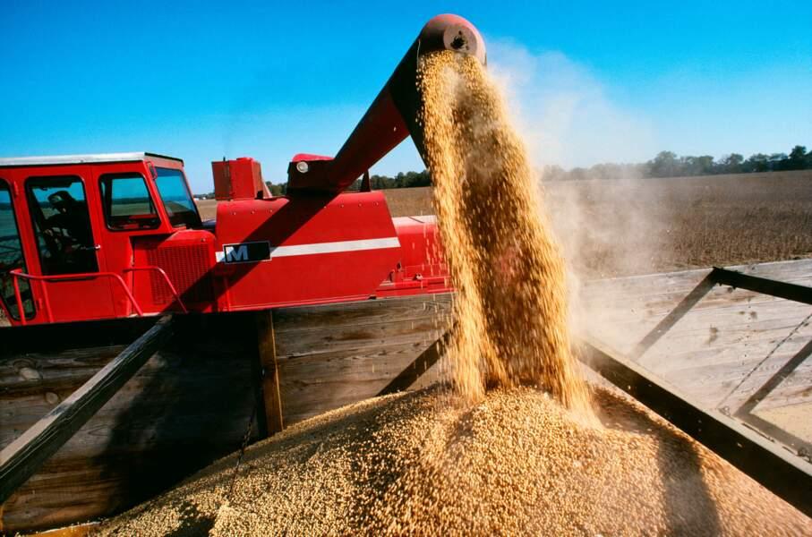 La Chine pourrait moins importer de denrées agricoles des Etats-Unis
