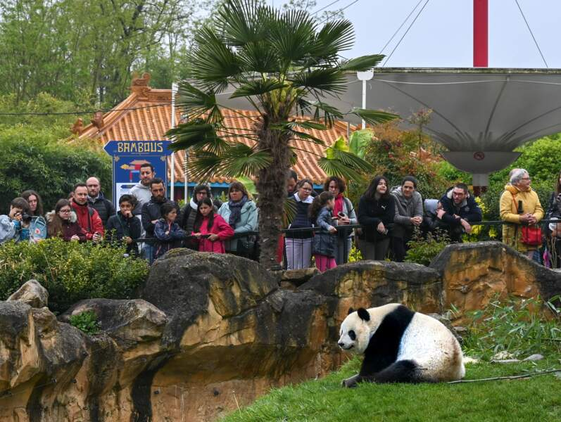 Avec 1,5 million de visiteurs annuels, Beauval est aujourd'hui le premier zoo de France