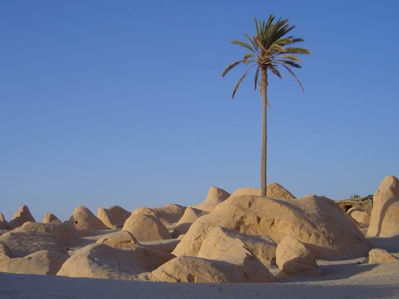 5. Tunisie