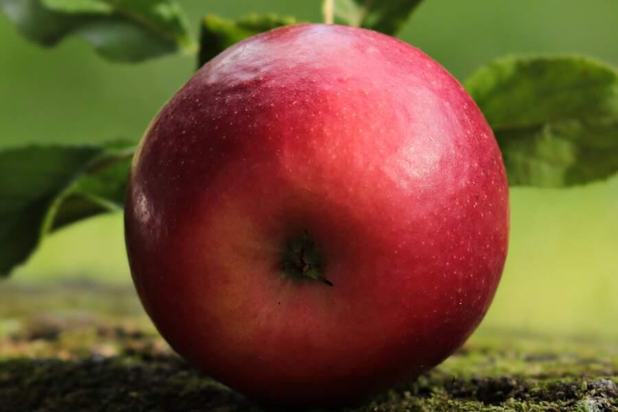 8. Pommes