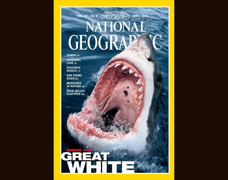 Il faut sauver les requins !