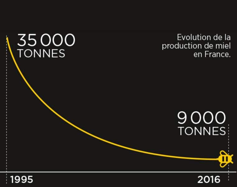 La production de miel en France a été divisée par quatre