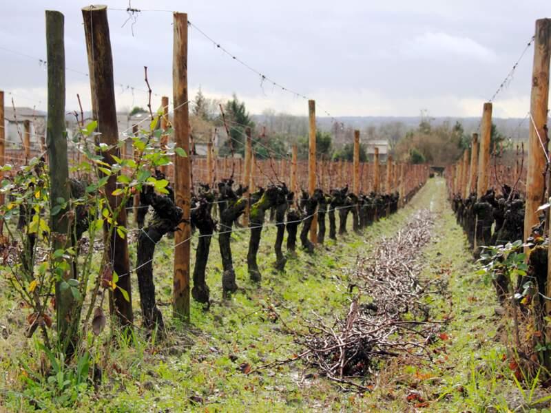 Les vins de Rhône, du Languedoc et de la Loire ont le vent en poupe