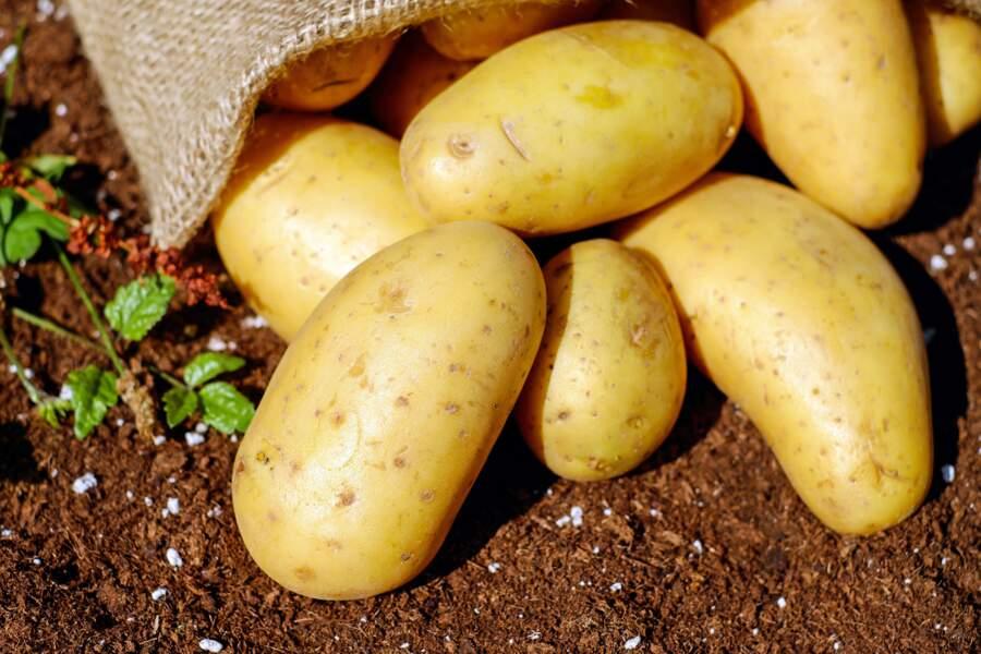 7. Pommes de terre