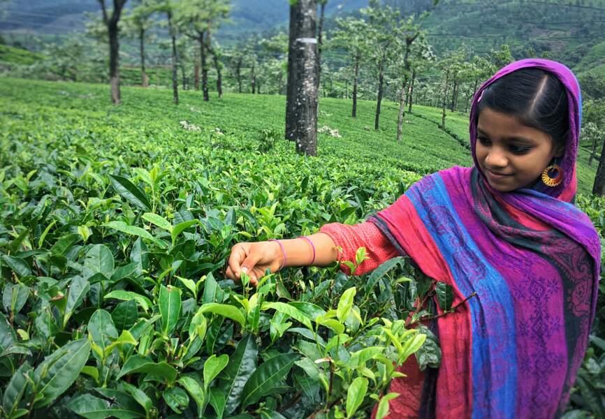 A partir de septembre : les agriculteurs indiens placent dans l'or les recettes issues des récoltes