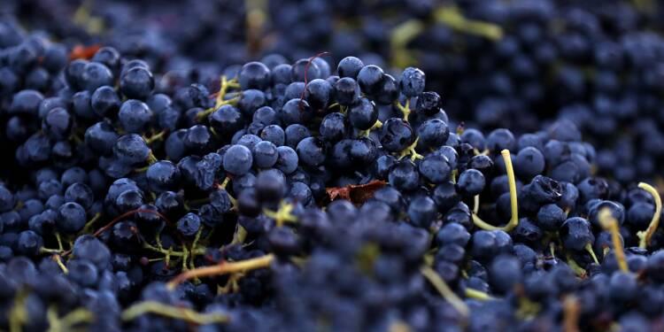 LVMH s'empare d'un domaine viticole prestigieux en Californie