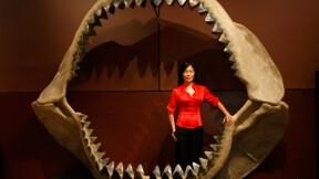 """Le requin préhistorique """"Meg"""", toutes dents dehors au cinéma"""