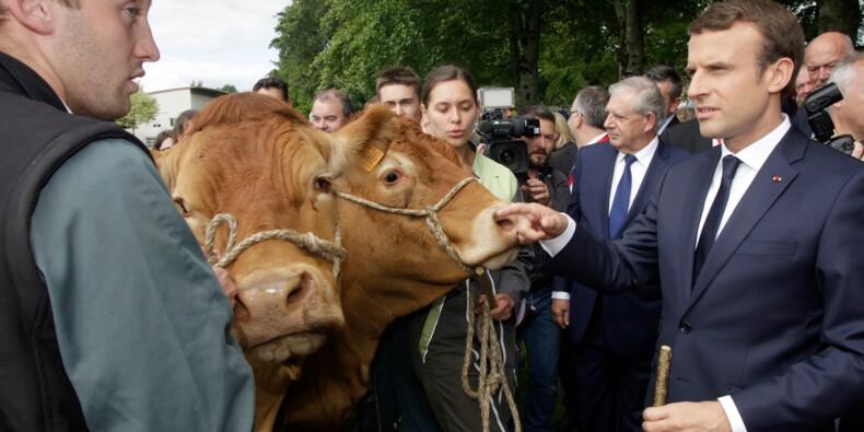 Opposée au choix de l'UE, la France se donne trois ans pour sortir du glyphosate