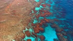 """En Australie,  les perspectives d'avenir pour la Grande Barrière sont """"très mauvaises"""" selon des scientifiques"""