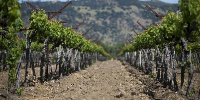La météo a pénalisé la production viticole mondiale en 2016 (-3%)