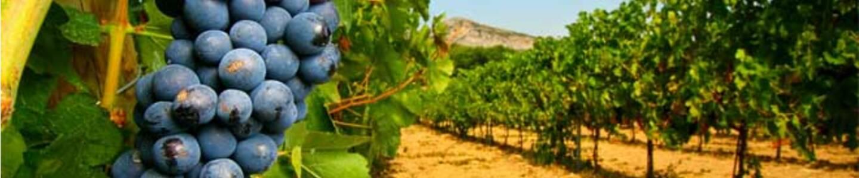 Foires aux vins 2016