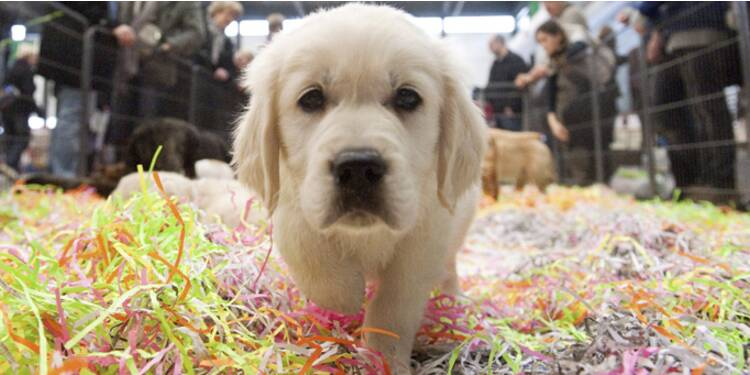 Une assurance santé animaux pour faire face à des soins vétérinaires trop chers