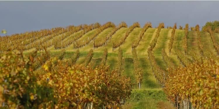 Les viticulteurs français peuvent-ils remporter la bataille de l'export?