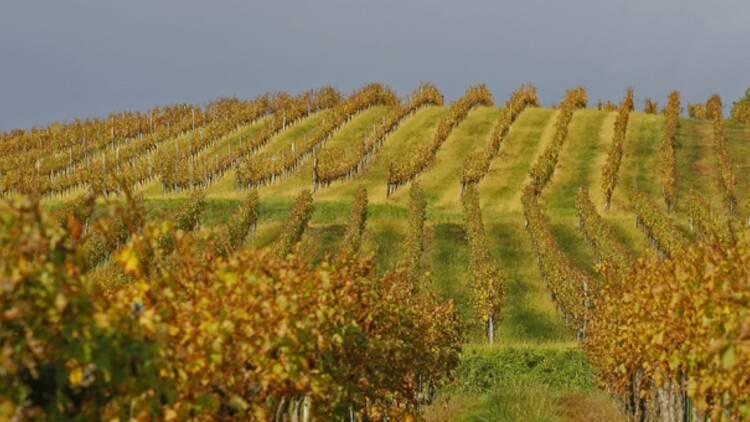 Foires aux vins 2016 : la carte de France des meilleures bouteilles
