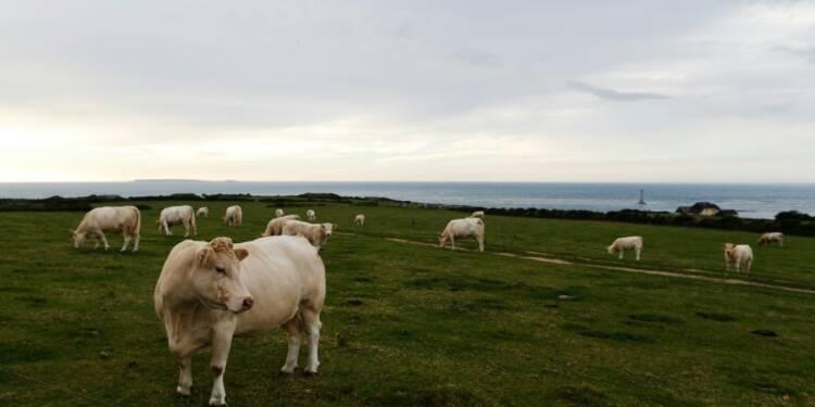 Lait: après avoir privilégié la productivité de leurs vaches, les éleveurs s'intéressent à leur santé