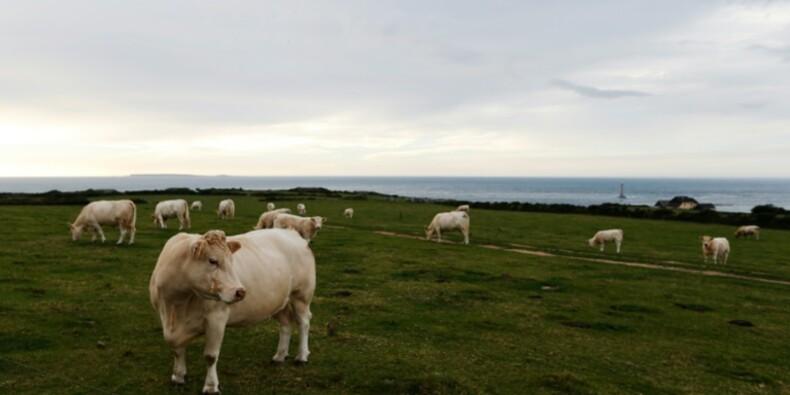 2016: année record pour la progression des fermes bio en Bretagne