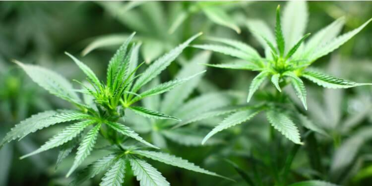 La légalisation du cannabis permettrait-elle de relancer la croissance en France ?