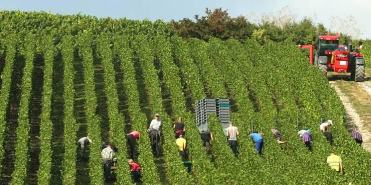 Baisse des exportations de vins au premier semestre
