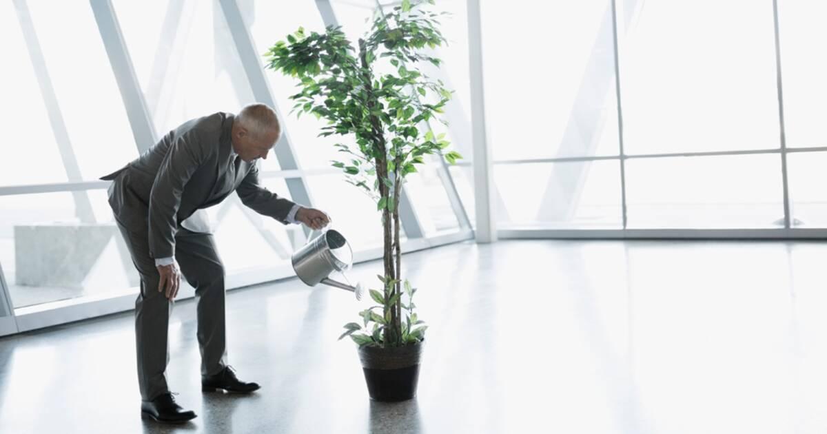 Jardins potagers des bureaux plus verts pour des salariés