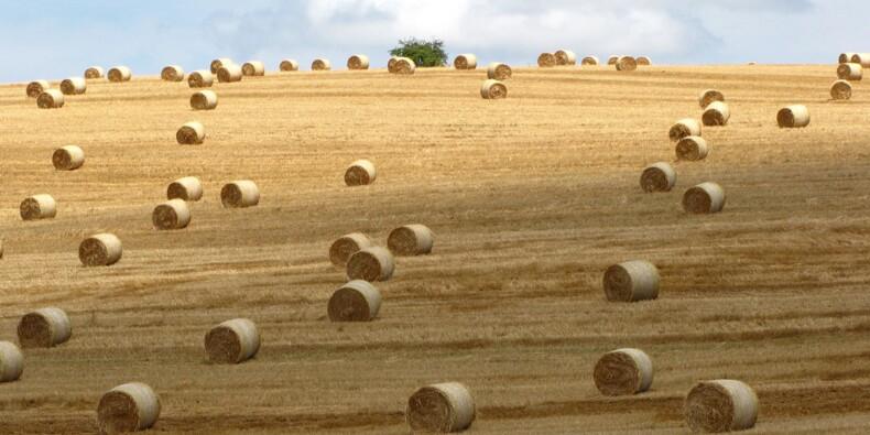 """""""Notre agriculture souffre d'un inquiétant déficit de compétitivité"""""""