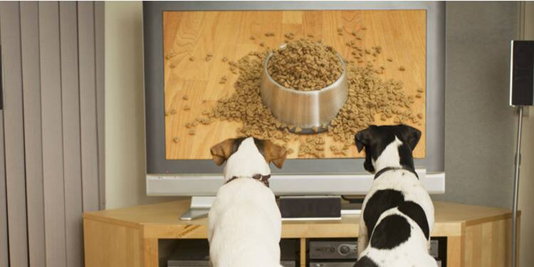 DogTV cible les chiennes de moins de 50 ans