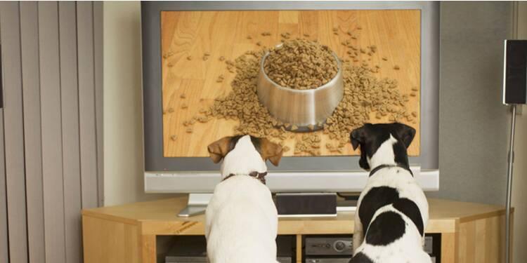 Votre chien s'ennuie ? Abonnez-le à Dog TV !