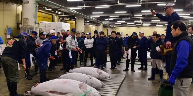 Japon: le déménagement du marché aux poissons de Tsukiji tourne au scandale