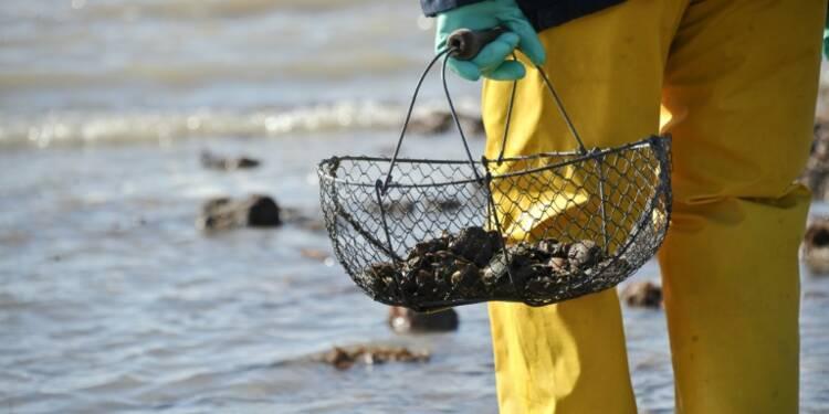 Morbihan: pêche et ramassage de coquillages interdits dans plusieurs zones