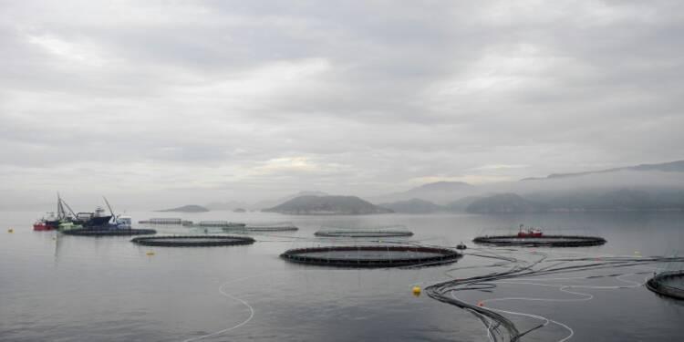 """Aquaculture stewardship council: un label pour """"verdir"""" les élevages de poissons"""