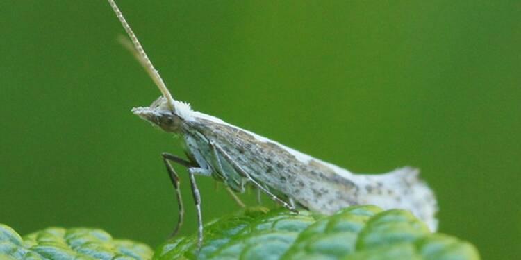 Les insectes envahissants nous coûtent 69 milliards d'euros par an