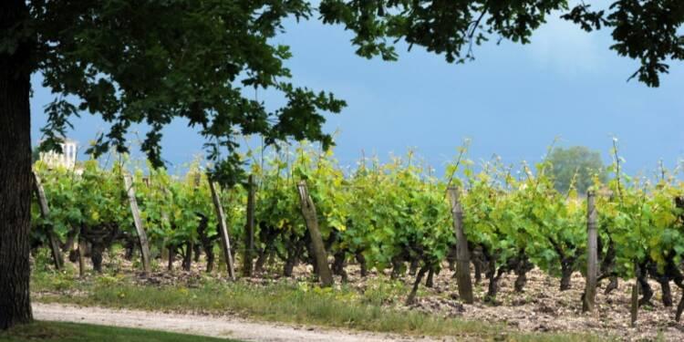 Les vins de Bordeaux ont toujours la cote en Chine, moins en Europe
