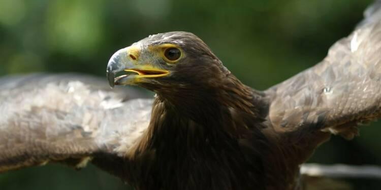 Vers des aigles chasseurs de drones malveillants en France